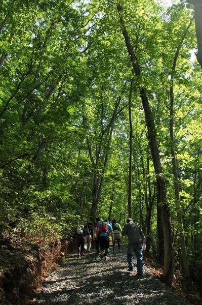 森林ハイク2
