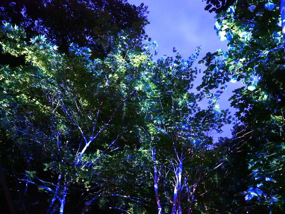 Jozankei Nature Luminarie 2017