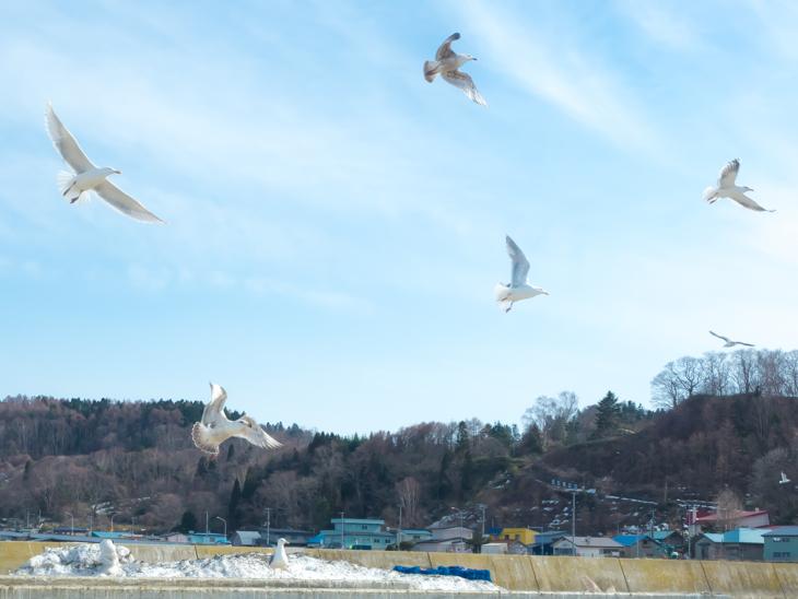 鷲ノ木漁港(森町)