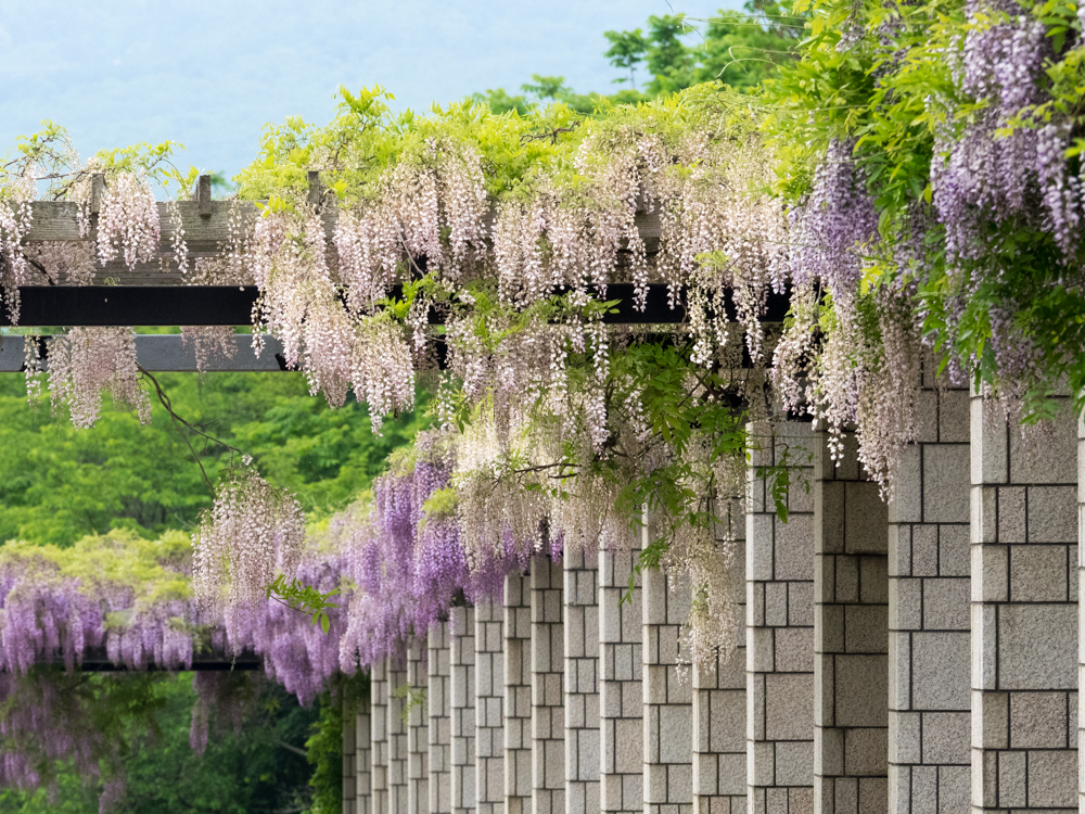 前田森林公園(6月)