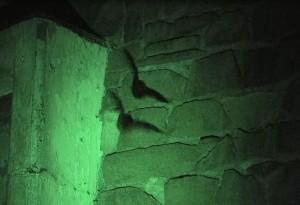 コウモリ キリン舎[1]